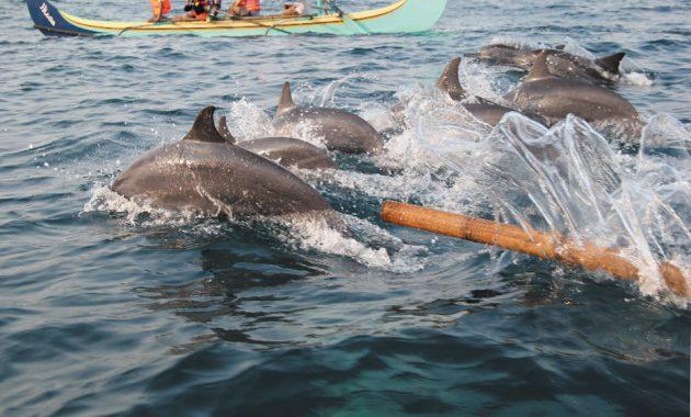 dolphins kiluan