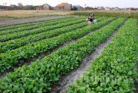 bisnis pertanian organik